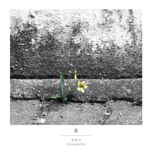 정밀아 - 꽃 앨범이미지